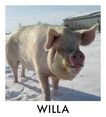 OP - Willa.jpg