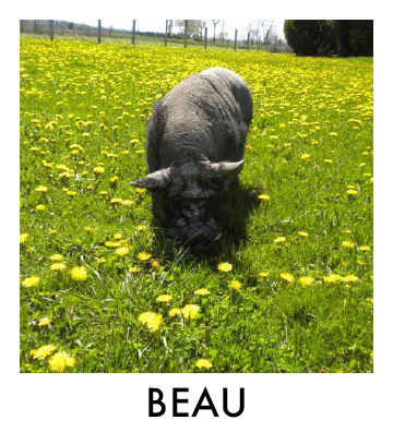 OP - Beau.jpg