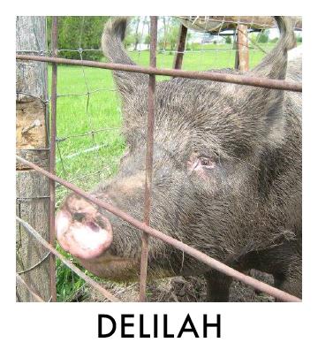 OP - Delilah.jpg