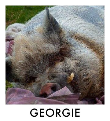 OP - Georgie.jpg