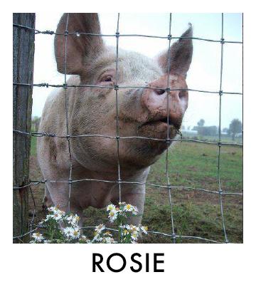 OP - Rosie.jpg