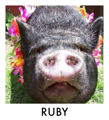 OP - Ruby.jpg