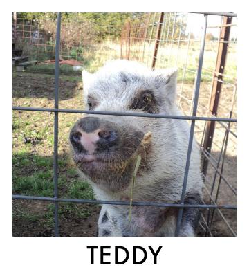 OP - Teddy.jpg