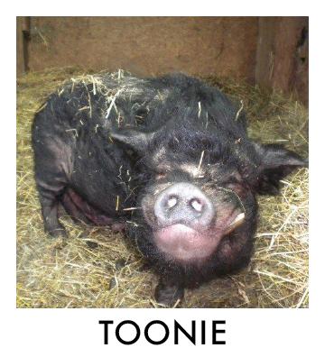 OP - Toonie.jpg