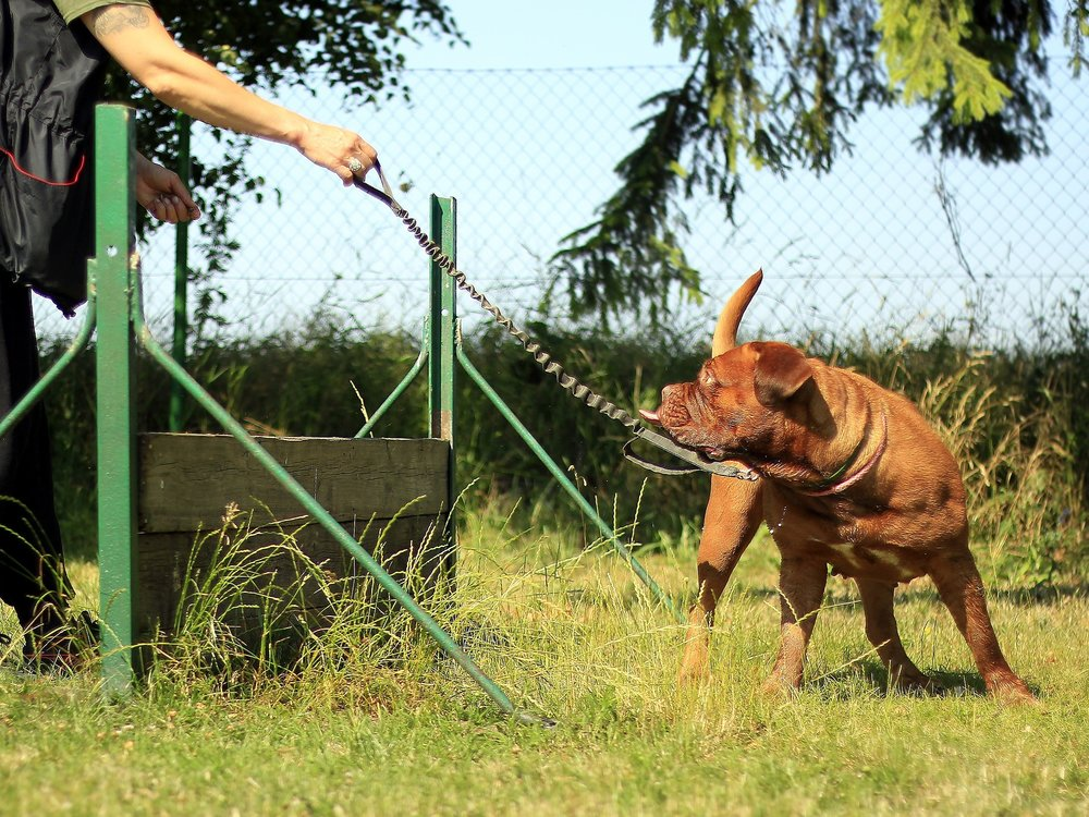 IN Dog workshops