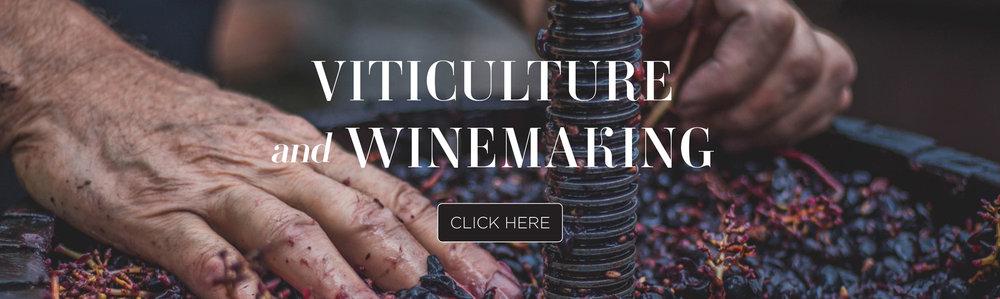 Winemaking-link-Image.jpg