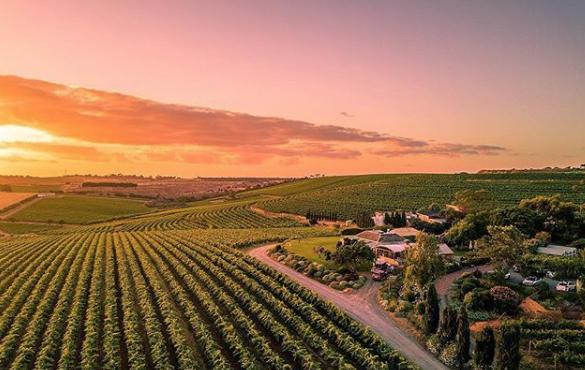 McLaren Vale – the premium place for organic wines -