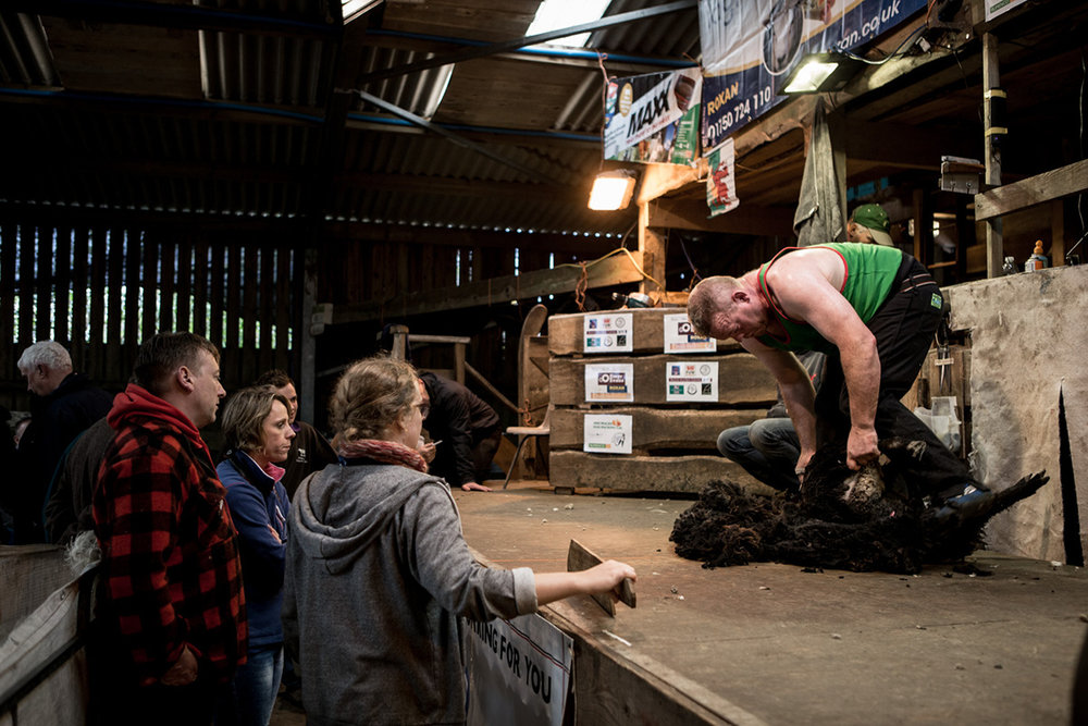 Blade shearing at Fernhill Farm.jpg
