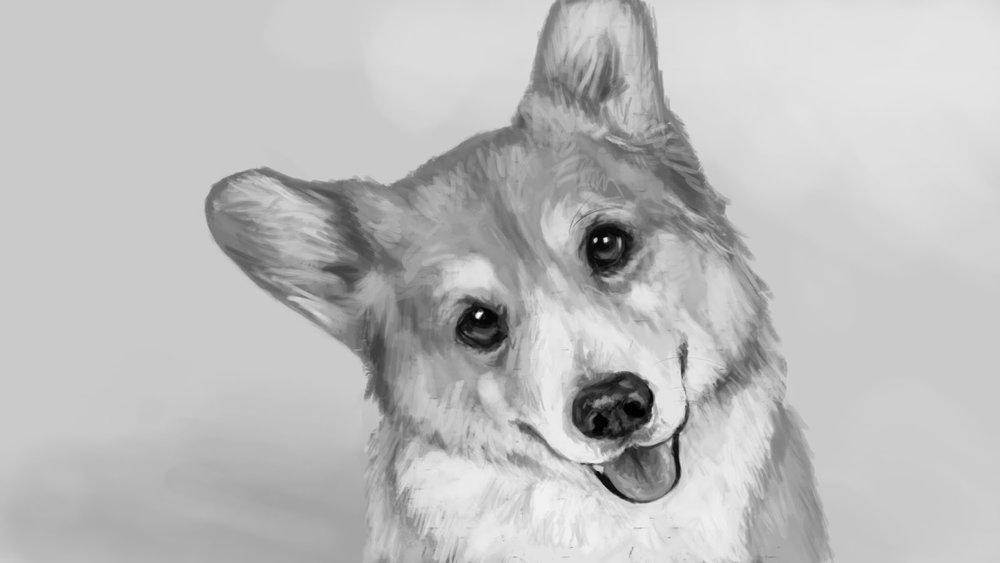 Corgi Portrait