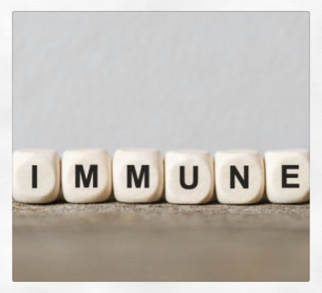 🦠 MEMORY, AMNESIA & IMMUNITY. . ⠀⠀⠀⠀⠀⠀⠀⠀⠀⠀⠀⠀ 🦠 After recovering from a cold* or other infection, your immune system is primed to react quickly if the same germ tries to infect again - known as immunological memory. (*there are  200 variants of common cold virus, hence you can catch many different ones). Immune memory cells remember individual germs & patrol the body for decades (even perhaps a lifetime), ready to protect if that germ ever tried to infect again. . ⠀⠀⠀⠀⠀⠀⠀⠀⠀⠀⠀⠀ 🦠 With the passing of time, this specific immunological memory can wear off.  Different types of germs appear to encourage different lengths of memory. How long this immunological memory lasts boils down to the location of the infection & the extent of infection, but also body composition, since memory cells like to live in fat tissue. Different germs vary in how they interact with our immune cells & consequently vary in how long a memory response for each infection will last. . ⠀⠀⠀⠀⠀⠀⠀⠀⠀⠀⠀⠀ 🦠 Vaccines work on the same principle: germs are doctored & transformed to render them harmless, then fragments are injected into us to provoke the immune system to generate memory immune cells that attack the real thing later on. The memory produced by vaccines is different for each type of vaccine.  This is why some require booster shots. Because vaccines don't 100% replicate the natural course of an infection, they (mostly - it depends) don't provide the same degree of memory. . ⠀⠀⠀⠀⠀⠀⠀⠀⠀⠀⠀⠀ 🦠 Some people maintain that acquiring the infection 'naturally' is better for our immune system, this may not always be the case for every infection. New data has shown that this is not true for measles - after infection with the virus the immune system developed long-term amnesia - not just for measles but many other infections previously encountered, leaving us vulnerable to diseases that otherwise might not have been a problem. . ⠀⠀⠀⠀⠀⠀⠀⠀⠀⠀⠀⠀ ❌I normally shy away from discussing vaccines online/anywhere due to bei