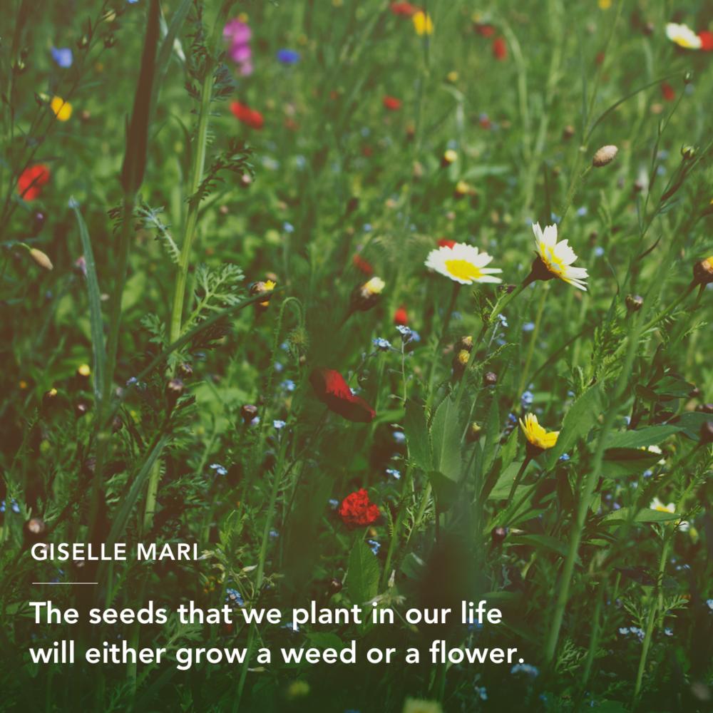 1 - Giselle IG.png