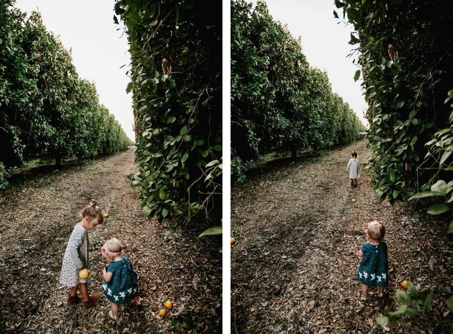 The Broguiere Girls // Orange Groves-Kandis Marino Photography©