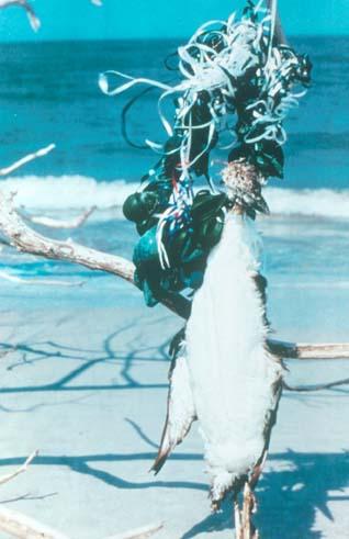 Bird dead from balloon ribbon Photo courtesy of The Ocean Conservancy.jpg