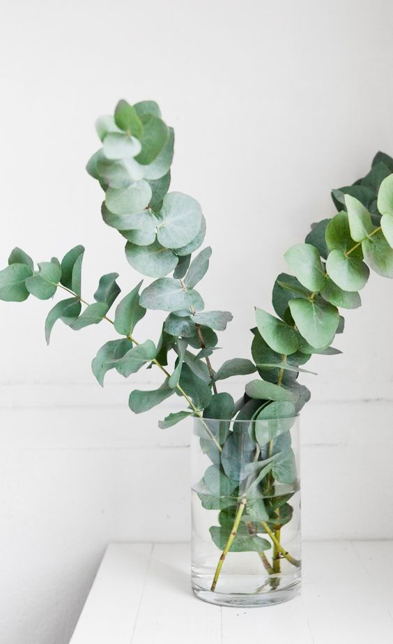 Best Indoor Plants For Your Home Jamie Banfield Design