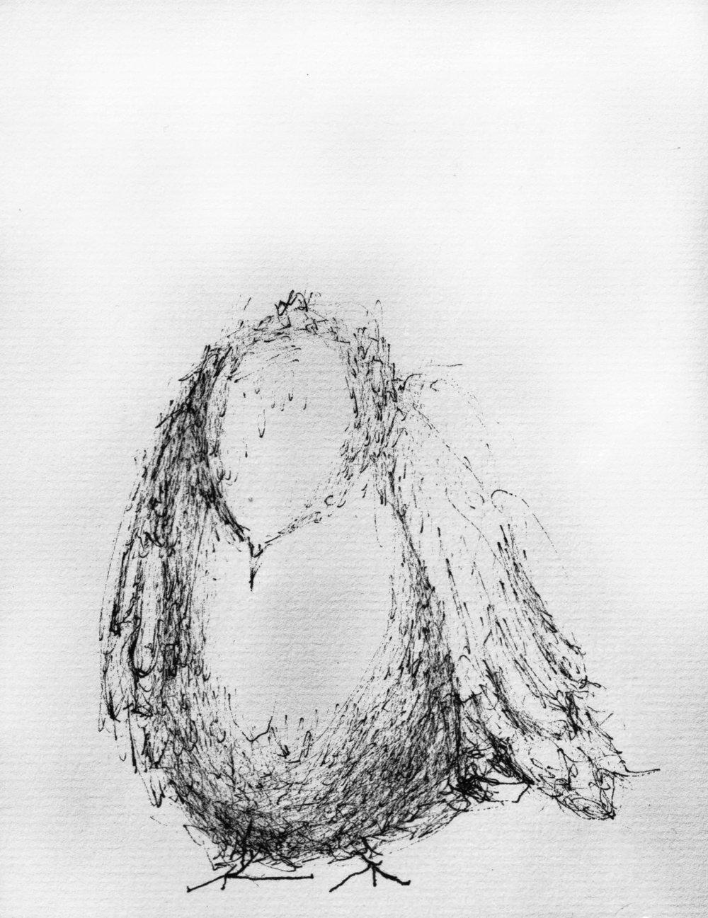 Coronil.birdface.grayscale.jpg