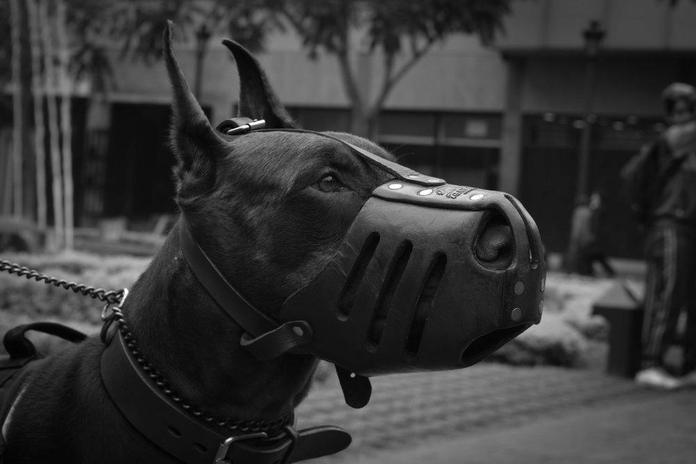 animal-animal-photography-black-and-white-1254434.jpg