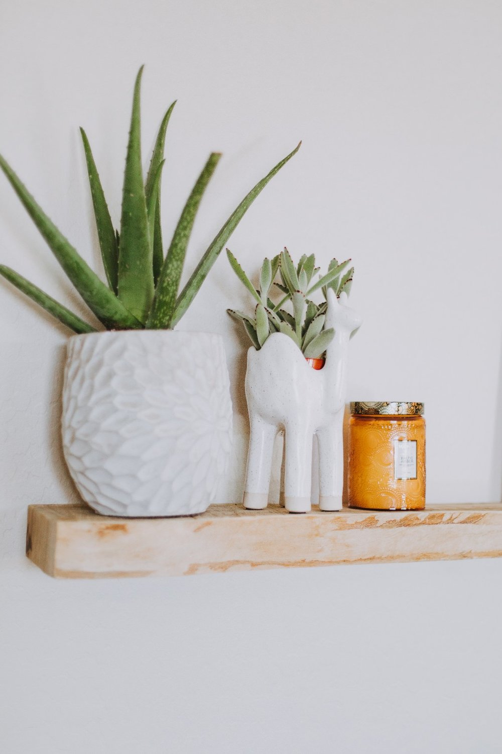 2. Aloe plant - This plant only needs to be watered every couple of weeks, allowing the soil to dry up to two inches below the surface! This plant needs a good amount of sunlight so be sure to place it in a room with a few windows.