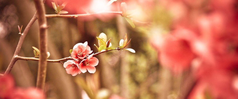 Pink Flower Bnner.jpg