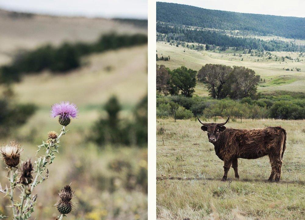 cowgirl-19.jpg