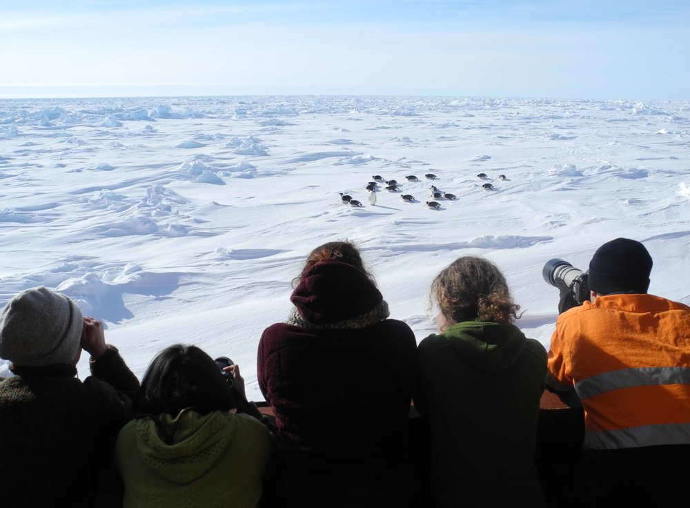 Photo: Jessica Melbourne-Thomas/Australian Antarctic Division