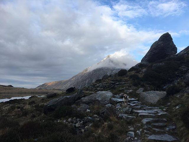 Dog on a mountain. #nofilter #eryri #snowdonia #dog #jackschitt #mountains #ogwen #cymru #walkies