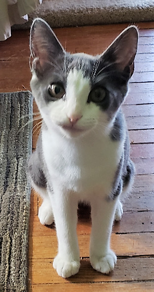 julia-catposse-kitten-adopt