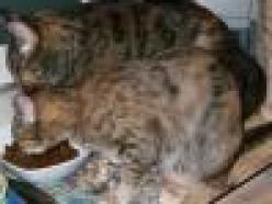 Delilah&Olivia-pair-tabby-senior-CatPosse-adopt