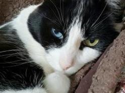 Sasha2-B&W-senior-CatPosse-adopt