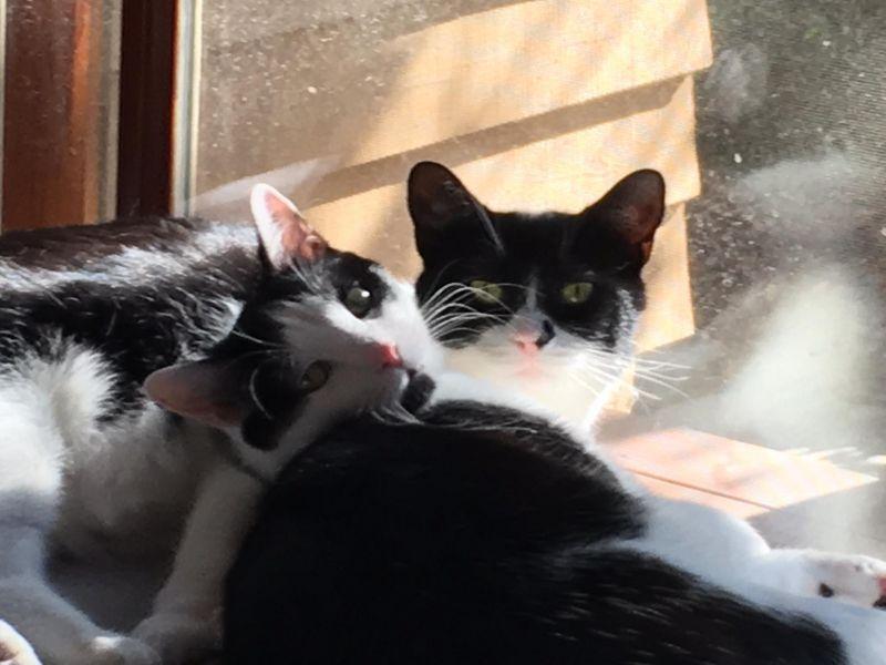 Guy&Madison-pair-bw-CatPosse-adopt