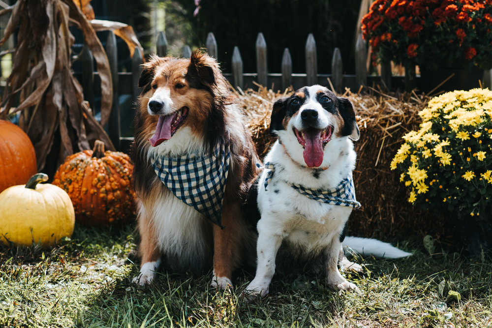 BLOG Barktoberfest 10-07-2018 SLY Photography LLC-5.jpg