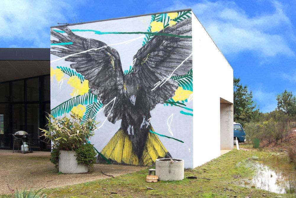 One flew over the black cockatoo's nest2.jpg