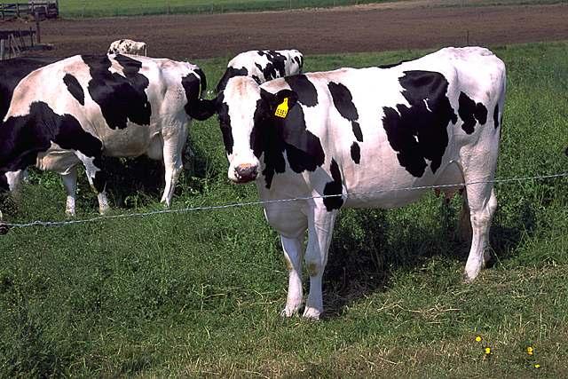 Cowspiracy-pic.jpg
