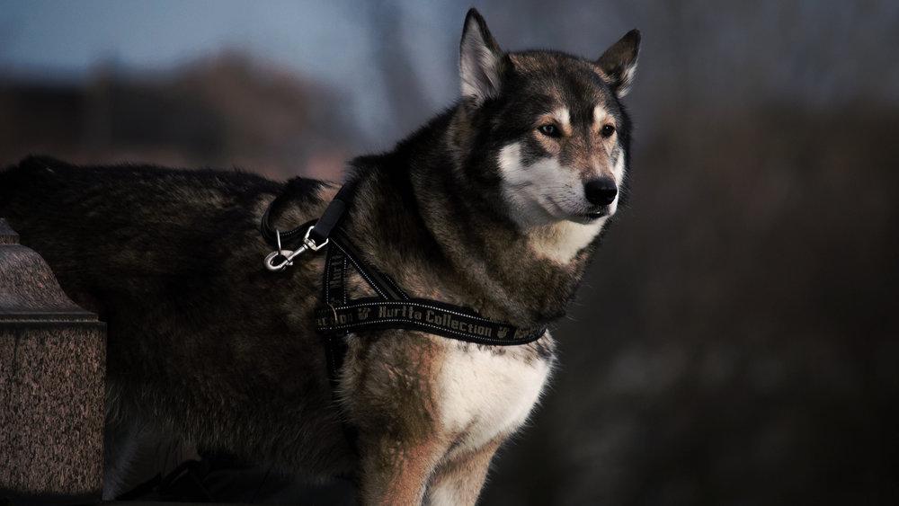 animal-dog-pet-fur.jpeg