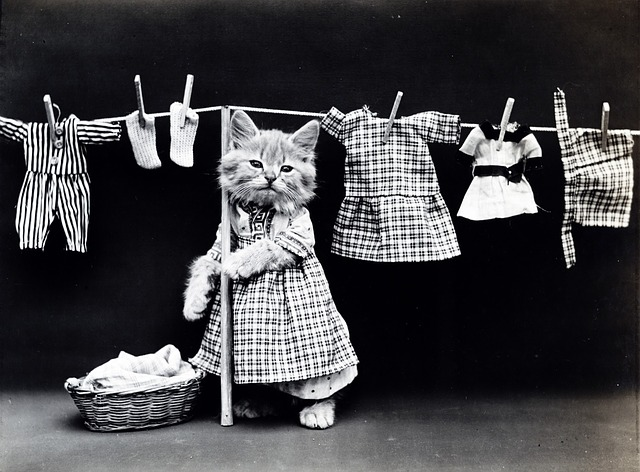 funny-option-laundry-2.jpg
