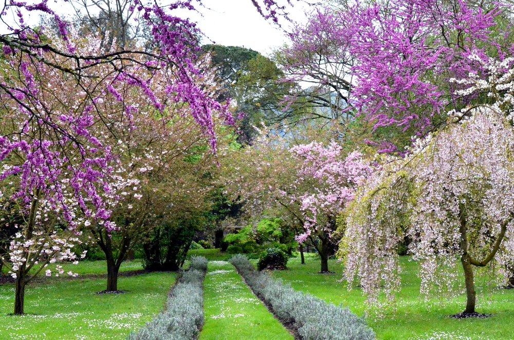 Spring_in_Ninfa_Garden.jpg