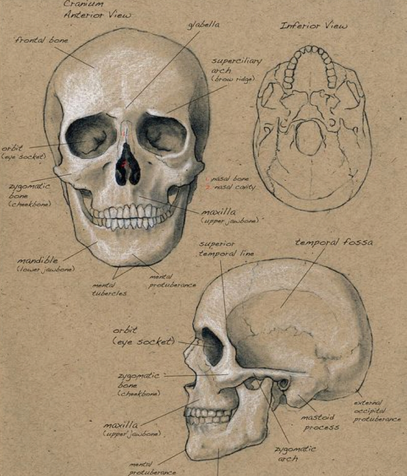 Features are moulded - faces are shaped; cellular memory casts how we think, look, feel and move