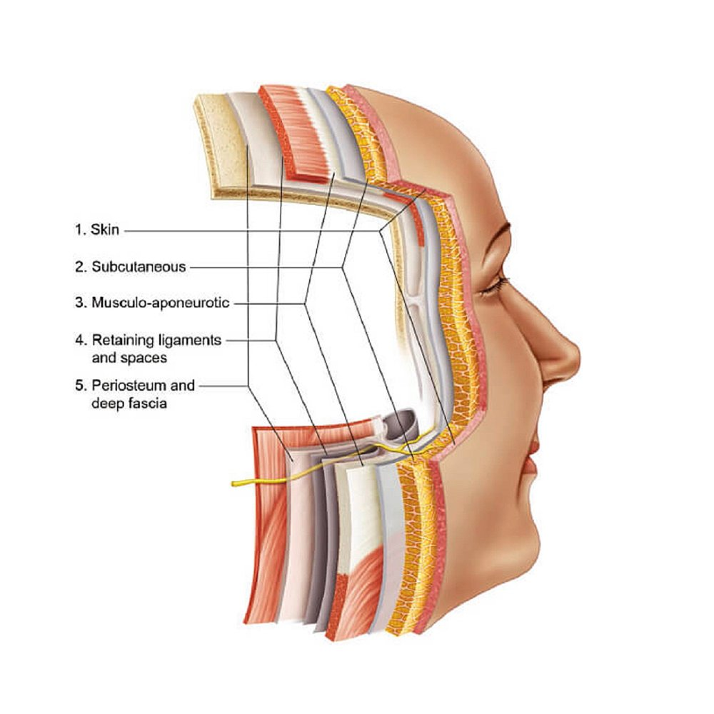 MUSINGS IN FASCIA - A brief exploration of how I incorporate myofascial release into radical, proageing facials