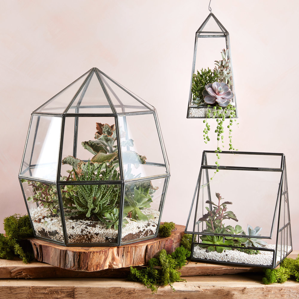 Terrariums - EXPLORE