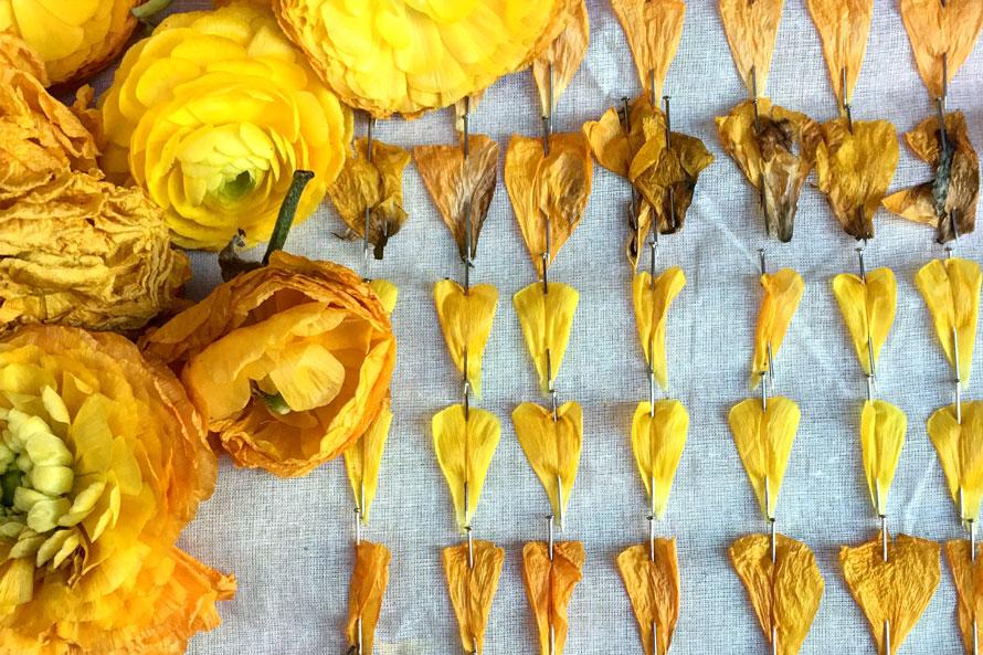 lee-simmons-botanical-artist-homepage-00.jpg