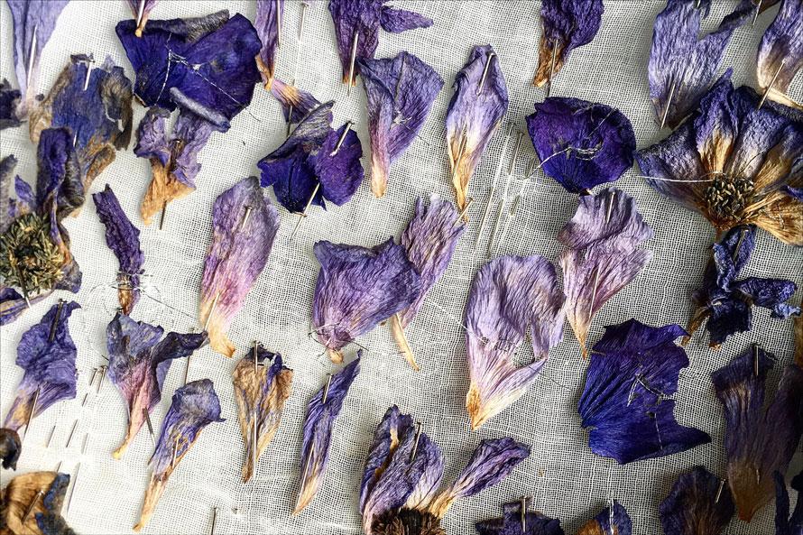 lee-simmons-botanical-artist-homepage-0015.jpg