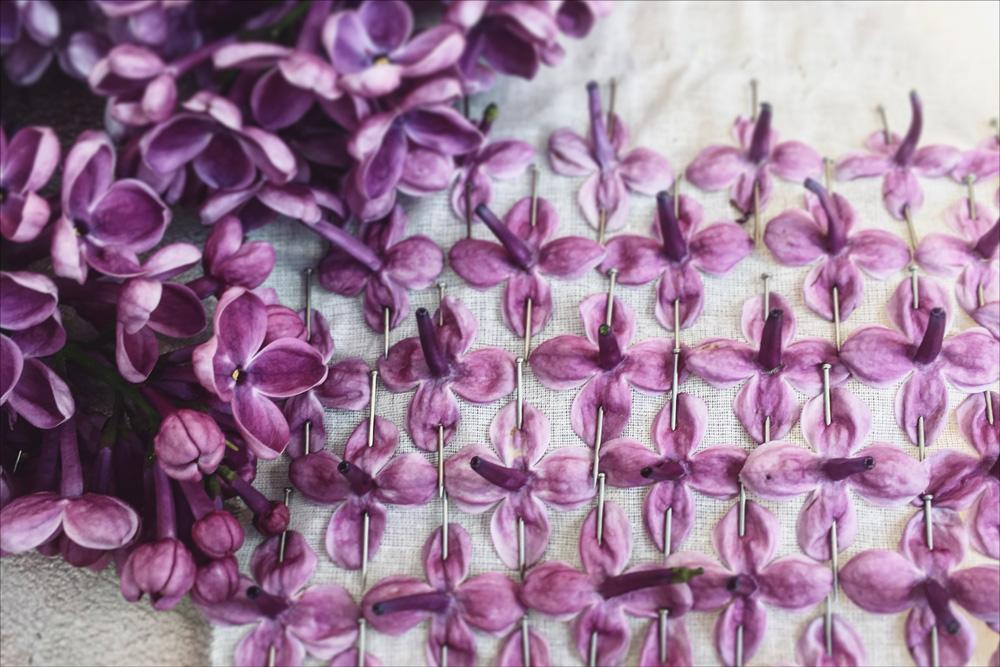 lee-simmons-botanical-artist-homepage-006.jpg