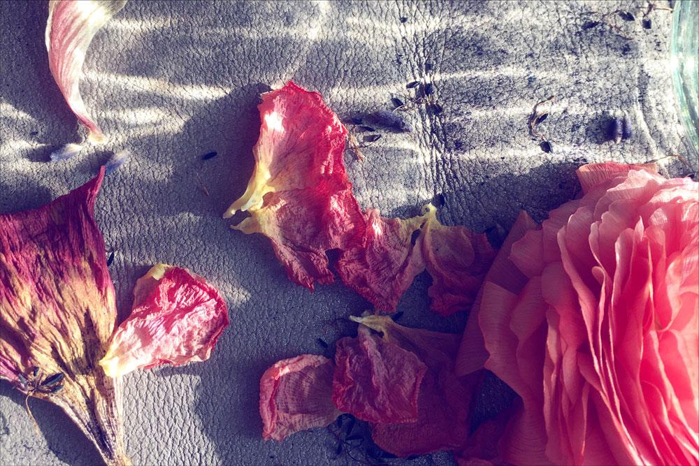 lee-simmons-botanical-artist-homepage-0010.jpg