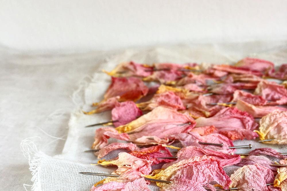 lee-simmons-botanical-artist-homepage-0013.jpg