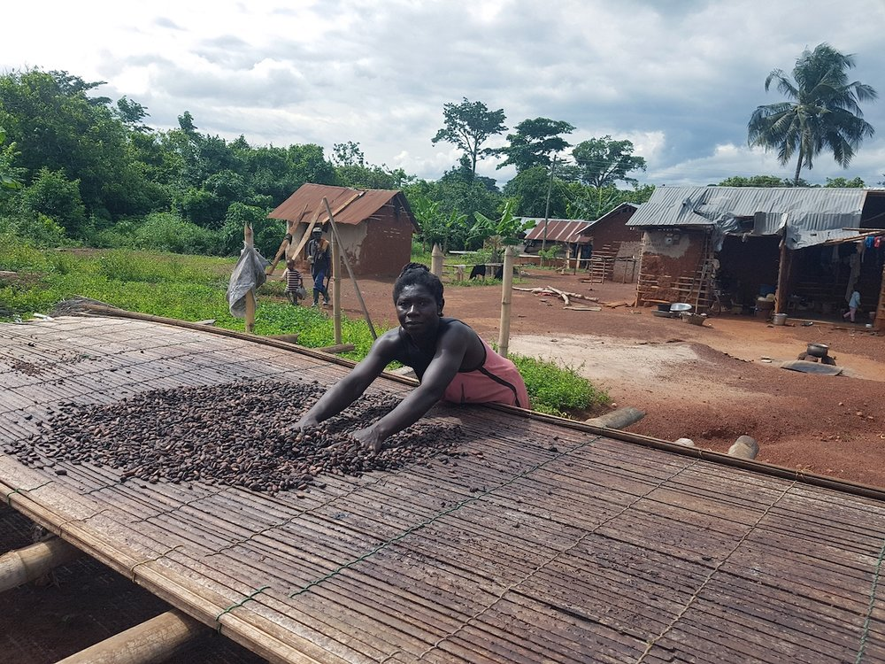 SAT4Farming: A worker drying cocoa beans at a small farm in southern Ghana