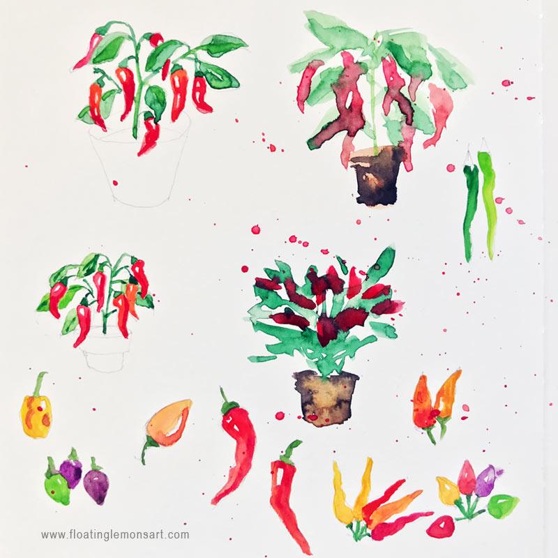 Chilli-sketches-3-floatinglemonsart.jpg