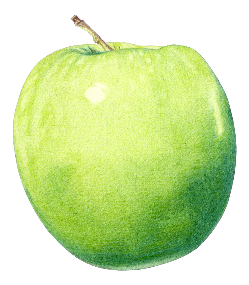 Apple by  Floating Lemons Art
