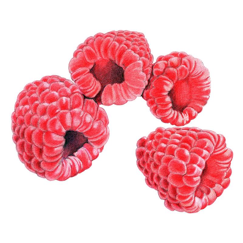 Raspberries by  Floating Lemons Art