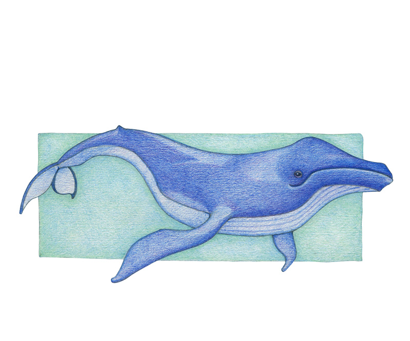 Whale by  Floating Lemons Art