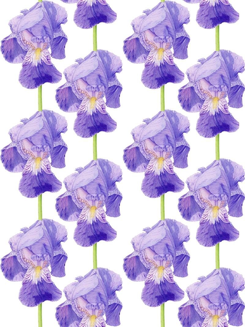 Purple Iris by  Floating Lemons Art