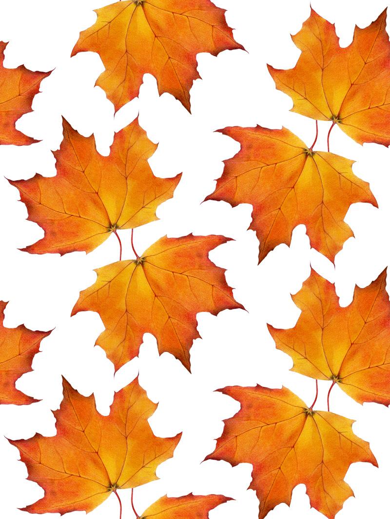 Maple Leaves by  Floating Lemons Art